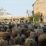 羊たちの出勤風景