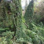 Rainforest along hike trail