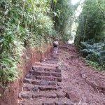 Walking track to Manoa Waterfalls