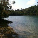 mangrove, beach