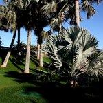 Palmetum Santa Cruz Jardín Botánico