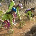 Eco Kids Activities