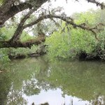 Scenic Estero river