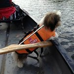 Dogs are welcome in our canoes too!