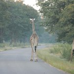 early morning game drive