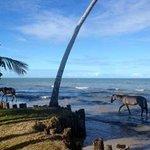 Vista do mar com maré alta e cavalos que ficam passeando por lá...