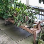 Bench for plants.