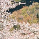 梅園の桜と春紅葉