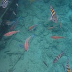 Snorkeling in Curacao