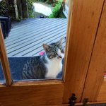 I want to come in... open the door now!