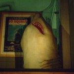 der Hai im Museum