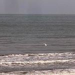 se ve el mar desde todos  lados y pasan gaviotas