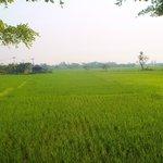 riziére