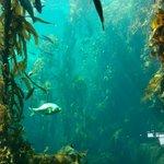 Kelp Forest is wonderful watch