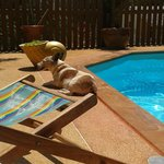 Benson by the pool