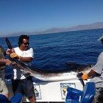Jake's Marlin