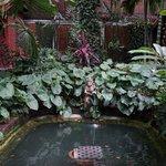 Maison de Jim Thompson jardin