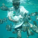 Snorkelling with Reef Tours