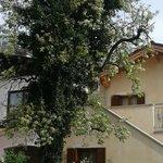 Blick zur Terrasse mit blühendem Birnenbaum