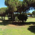 Vista del campo de golf desde mi habitación.