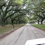 Oaks drive heading to parking lot