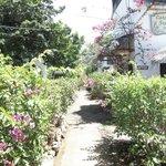 entering the property. Love the garden!