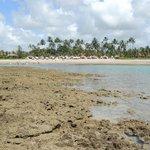 Arrecife enfrente a la playa del Hotel