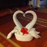 Swans Towel