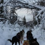Dogsledding in Winter Wonderland