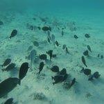 Mar Azul, Quente e Muita Vida Marinha
