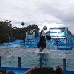 Show de la Orca y Delfines