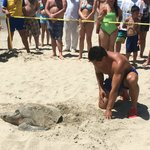 Mama turtle