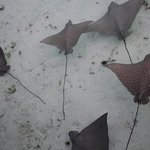 We saw these manta rays in the evening after watching the sunset from the deck