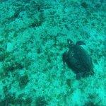 fond marin 2 voir les tortues avec moniteur Socrates