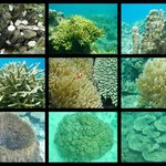 Some of the corals found in the waters of Atwayan Beach