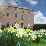 Spring time and the garden turns into a sea of daffodils - Dollardstown House Historic Country H