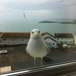 View from room 214 with Sara the seagull who loves shortbread