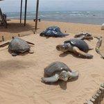 Open Air Marine Turtle Museum