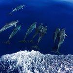 Dolphin trip!
