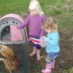 Feeding the chickens at Willowfield