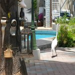 A visitor by the pool