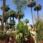 Very high palmtrees in the vast garden