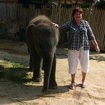 Слоненок на ферме