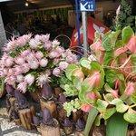 Необыкновенные цветы Мадейры