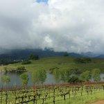 Quintessa vineyard view