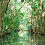 Beautiful rowboat ride through rainforest (by a guide)