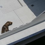 Seal sleeping on deck of boat moored at the end