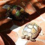 The Riad pets!
