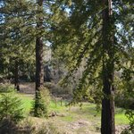 View from our deck in the Redwood Cottage