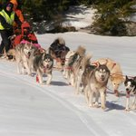 10 dog strong across Squam Lake NH